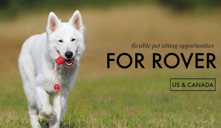 Pet Sit for Rover and Make Money On Your Own Time